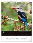 Ptáci 2019, nástěnný kalendář, prodloužená záda