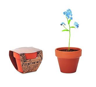 Květináč se semínky pomněnky