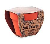 Květináč se semínky slunečnice